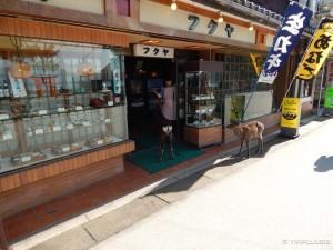 Miyajima - srne krenule u restoran