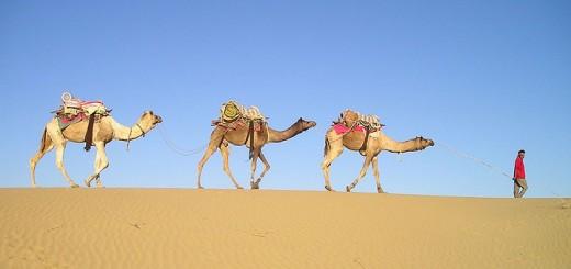 Camel-720