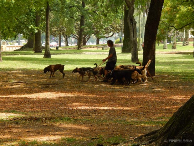Paseadores de perros iliti profesionalni šetači pasa