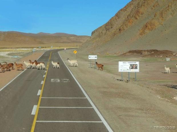 Kako lame prelaze cestu? Pa na pješačkom prijelazu.