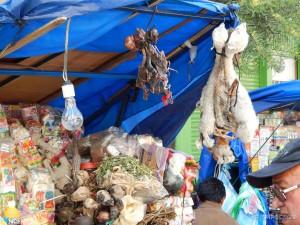 Vještičji market, glavni artikal su fetusi lame