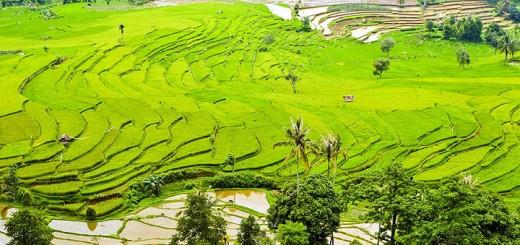 Rice-terraces-720