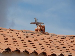 Bikovi se postavljaju na krovove da čuvaju dom
